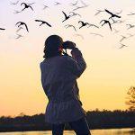 bird-watching-youghal-ireland-ballyvergan-marsh
